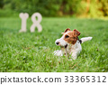 Adorable happy fox terrier dog at the park 2018 33365312