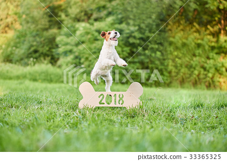 Adorable happy fox terrier dog at the park 2018 33365325