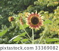 花朵 花卉 花 33369082