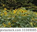 花朵 花卉 花 33369085