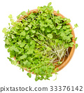 Rocket salad sprouts, arugula, in wooden bowl 33376142