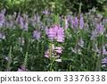 花朵 花 花卉 33376338