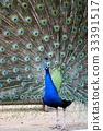 动物 鸟儿 鸟 33391517