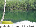 summer, forest, pond 33391640