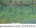 summer, forest, pond 33391641