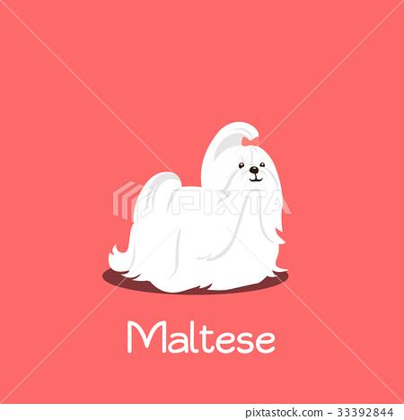 An illustration depicting a cute Maltese dog 33392844