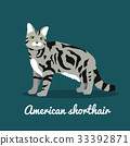 American shorthair cat pet is standing 33392871