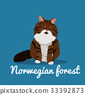Norwegian forest cute cat animal illustration. 33392873