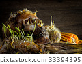 Human skull with corn shoots on the old wooden  33394395