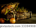 Still life with human skull with old treasure ches 33394908