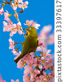 히마라야자쿠라있는 풍경, 겨울 벤텐 거리 공원 33397617