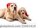 Two golden retriever dogs with Santa Claus hats 33401414
