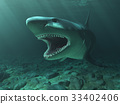 Great White Shark 33402406