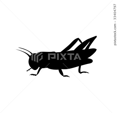 Locust grasshopper insect black silhouette animal 33404797