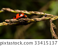 Ladybird with black spots on a green leaf  33415137