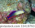 水下照片 海底的 海裡 33419763