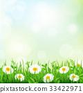 background, blossom, chamomile 33422971