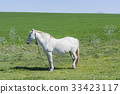 White horse in the countryside 33423117