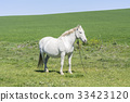 White horse in the countryside 33423120