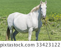 White horse in the countryside 33423122