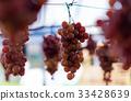 Nice hanging grape fruit 33428639