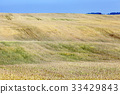 yellow, harvest, harvested 33429843