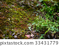 roof, moss, old 33431779