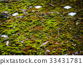 roof, moss, old 33431781