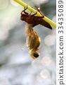 곤충, 잠자리, 클로즈업 33435089