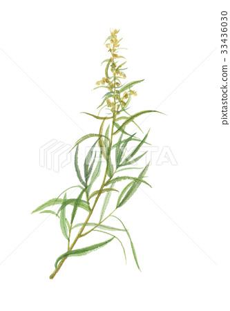 植物 植物學 植物的 33436030