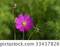 가을, 꽃, 꽃봉오리 33437826