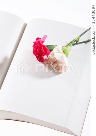책,꽃,카네이션 33443097