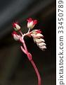 花 芽 仙人掌 33450789