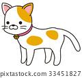 猫 猫咪 小猫 33451827
