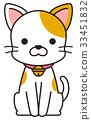猫 猫咪 小猫 33451832