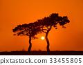 노을, 소나무, 태양 33455805