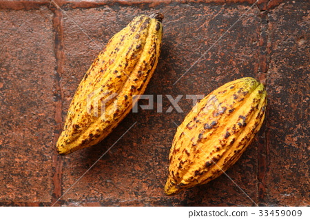 Cacao in Guatemala / Cacao in Guatemala 33459009