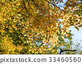 tree with yellow leaves in autumn and sun-rays 33460560