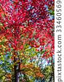 秋天 秋 樹葉 33460569