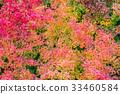 秋天 秋 樹葉 33460584
