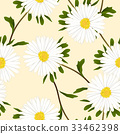 White Aster Flower on Ivory Beige Background.  33462398