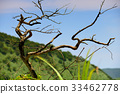 plant, plants, vegetation 33462778