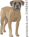Vector. Dog Boerboel. 33468487