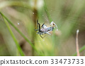 a spider is captive to its prey in its network 33473733