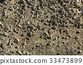Barnacles on Rock. 33473899