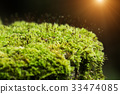 Green moss in the forest. 33474085