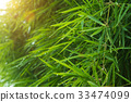 Green bamboo leaves after rainfall. 33474099
