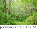 在森林裡的長凳 33475158