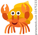 Hermit crab on white background 33475233