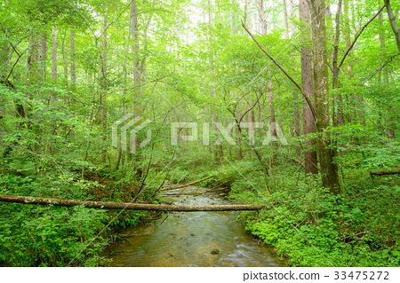 Forest Brook 33475272